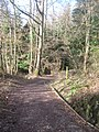 Access track in Burrs Wood - geograph.org.uk - 1735608.jpg
