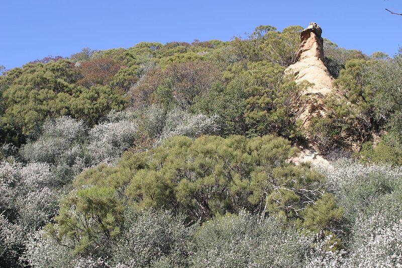 File:Adenostoma sparsifolium and Ceanothus megacarpus 2.jpg