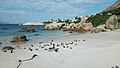 African penguins (Spheniscus demersus) at Boulders Beach (03).jpg