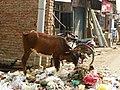 Agra 191 - Sikandra trip (27738921618).jpg