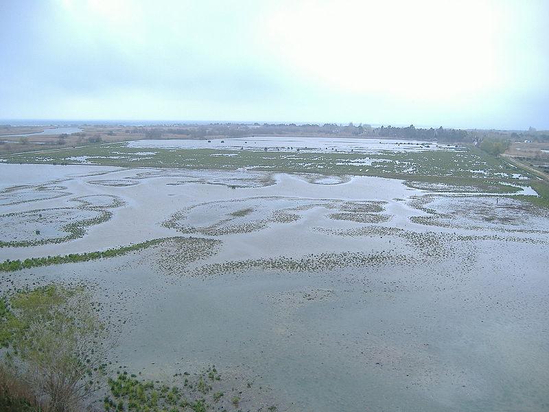 Aiguamolls wetland