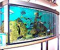 Akwarium-rybaczówka.jpg