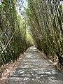 Allée de bambous.jpg