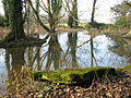 Allenford Pond Damerham Hampshire - geograph.org.uk - 112291.jpg