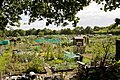 Allotment Gardens, Upper Northam Drive - geograph.org.uk - 1402992.jpg