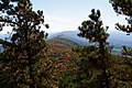 Along-the-north-fork-mountain-trail - West Virginia - ForestWander.jpg