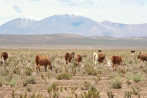 Climatic regions of Argentina - The Altiplano/Puna region is located in western parts of the region, characterized by an arid and cold climate with large diurnal ranges and high sunshine duration.