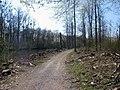 Am Altrhein bei Daxlanden - geo.hlipp.de - 2929.jpg