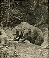 American big-game hunting- the book of the Boone and Crockett club; (1901) (14595386330).jpg