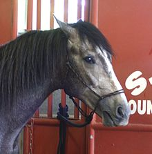 Horse behavior - Wikipedia