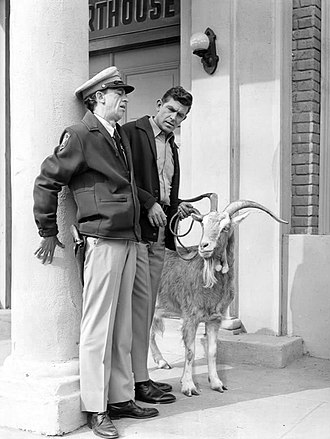 Barney Fife - Barney panics when he and Andy need to deal with a goat who has eaten dynamite.
