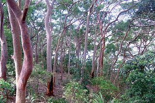 Balls Head Reserve Forested headland nature reserve