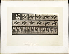 Animal locomotion. Plate 620 (Boston Public Library).jpg