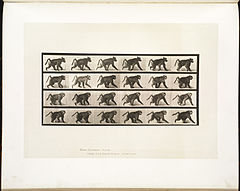 Animal locomotion. Plate 748 (Boston Public Library).jpg