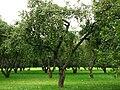 Apple orchards in Kolomenskoye 22.JPG