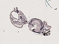 Araneae (YPM IZ 093463).jpeg