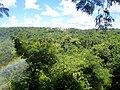Arcoiris y vegetación - panoramio.jpg