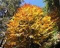 Aspromonte - L'albero - panoramio.jpg