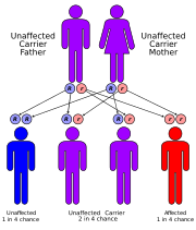 Wilson disease is inherited in an autosomal recessive fashion.