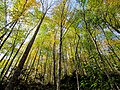 Autum Trees Black Mountain Campground Pisgah Nat Forest NC 4313 (37894465296).jpg