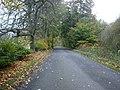 Autumn Leaves - Knockiemill - geograph.org.uk - 1341871.jpg