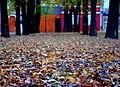 Autumn in Logroño - panoramio.jpg
