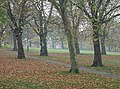 Autumn leaves on The Forest - geograph.org.uk - 604544.jpg