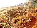 Autumn shades in bracken on hillside, Broadsands beach - geograph.org.uk - 375986.jpg