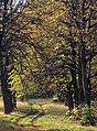Autumnal avenue, Ledston Park - geograph.org.uk - 1041080.jpg