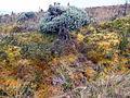 Azufral, volcán flora 4.JPG