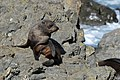 Baby fur seal sitting on the rocks at Sinclair Head seal colony.jpg