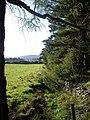 Back of Finzean Community Woods - geograph.org.uk - 1491610.jpg