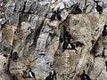 Bahía Ushuaia 254.JPG