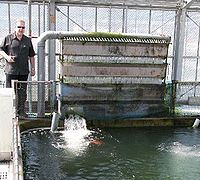 Bakki Shower at the koi farm