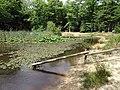 Balade en forêt d'Évreux 016.jpg