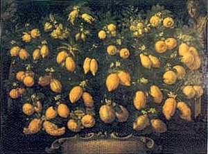 Bartolomeo Bimbi - Medici citrus collection, 1715