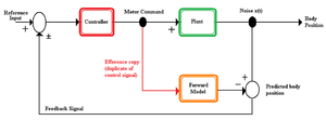 Internal model (motor control) - Figure 1. The desired position of the body is the reference input to the hypothetical controller, which generates the necessary motor command. This motor command is sent to the plant to move the body and an efference copy of the motor command is sent to a forward model. The output from the forward model (predicted body position) is compared with the output from the plant (body position). Noise from the system or the environment may cause differences between the actual and predicted body positions. The error (difference) between the actual and predicted positions can provide feedback to improve the movement for the next iteration of the internal model.