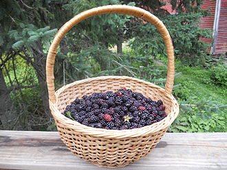 Blackberry - A basket of wild blackberries