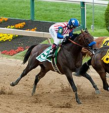 Photograph of Bayern in a horse race