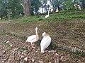 Beauty of Nature 140026 000.jpg