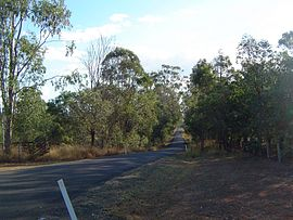 Beethams Road Ironbark.jpg