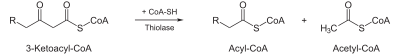Beta-Oxidation4.svg