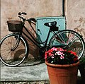 Bici e fiori.jpg
