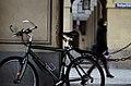 Bicycle (31346813).jpeg