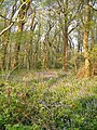 Bilberryhill Copse - geograph.org.uk - 168451.jpg