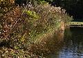 Binsen im Nymphenburger Park im Pagoddenburger See.JPG