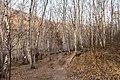 Birch forest at Labagoumen (20201025151159).jpg