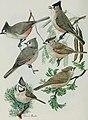 Bird-lore (1915) (14755080802).jpg