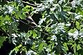 Bird (4846971845).jpg