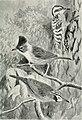 Bird notes (1913) (14727036416).jpg